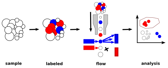 Workflow of flow cytometry experiment