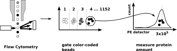flow principle of protein array